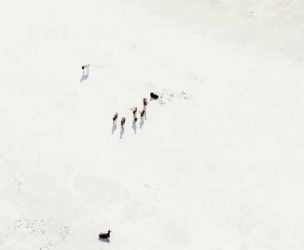 Zach-Seckler-Botswana-11