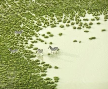 Zach-Seckler-Botswana-12