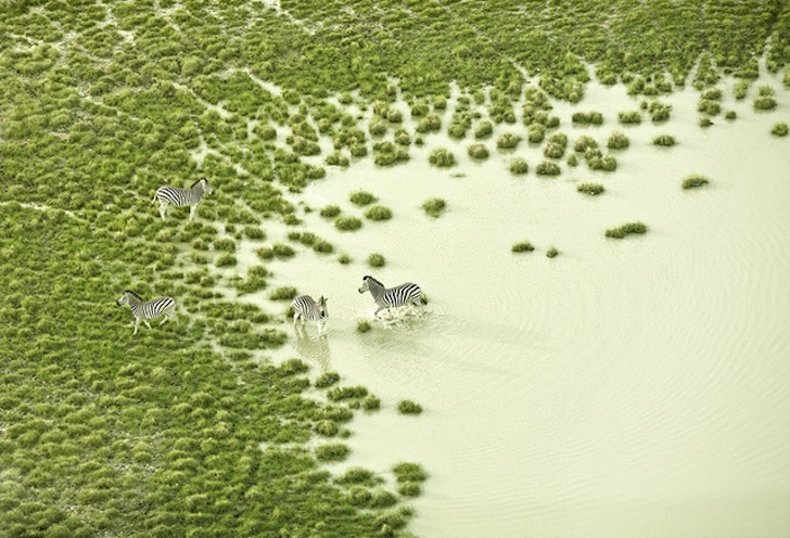 Photographer Zack Seckler Snaps Rare and Beautiful Aerial Photographs of Botswana Wildlife
